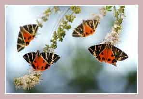Долина бабочек