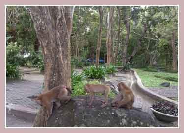 Гора обезьян, Пхукет