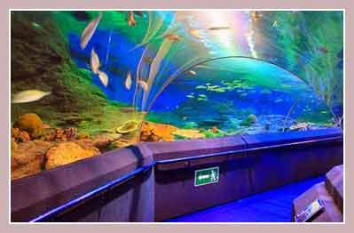 Подводный мир в Паттайе