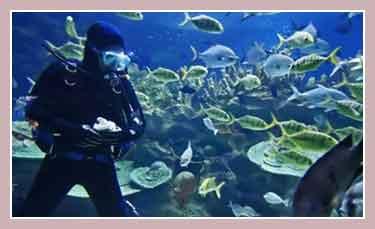 Морской заповедник на островах Медес